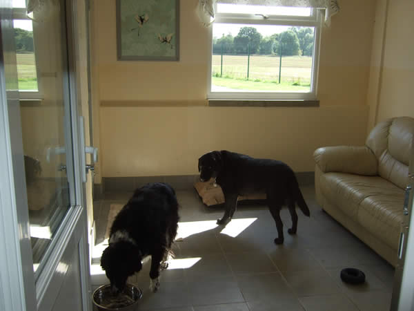 Dogs playing in our luxury dog hotel suites in Staffordshire